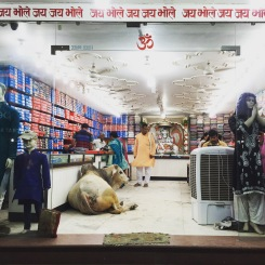 Cow sitting in the middle of a fabric store, Varanasi